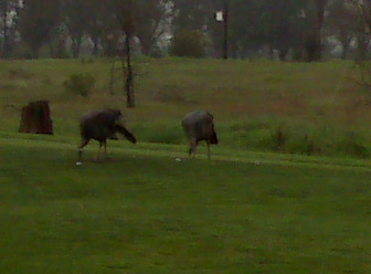 2_turkeys