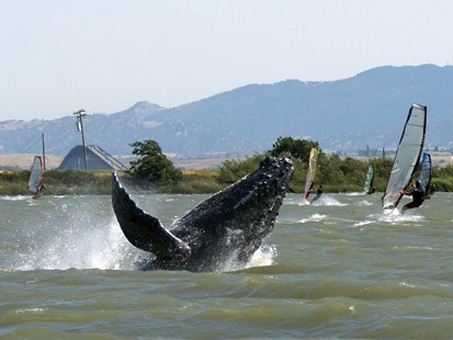 ht_whale_070529_ms